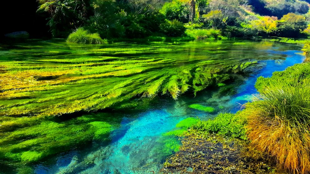 the blue spring randonnée te waihu